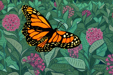 http://www.davidsuzuki.org/what-you-can-do/what-you-can-do-to-bring-back-monarch-butterflies/