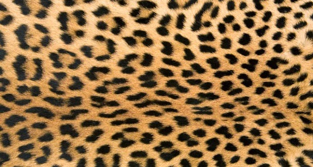 A Sociedade do Leopardo