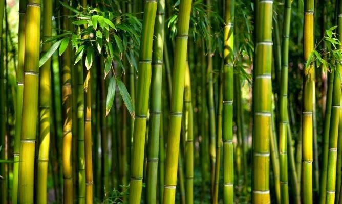 Ventajas del Bambú