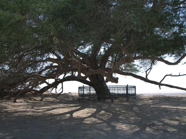 شجرة الحياة فى البحرين