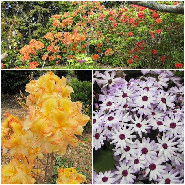 taranaki-spring-colors