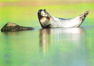 Тюлень в гавани