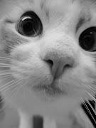 Doação Tumblr: Imagens TumblrGatos (imagens tumblr gatos kk)