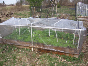 Hoophouse Full of Greens 3/15/11