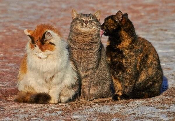 Funny cats - part 90 (40 pics + 10 gifs), three stray cats