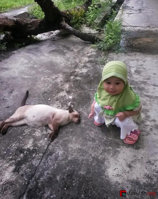"""Kelahiran si Pupus, Kucing """"Persia"""" yang Kesasar-2"""