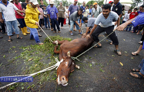 harga ibadah korban online lembu kambing