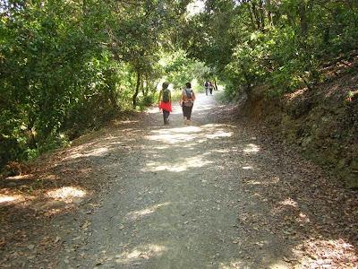 Walking in Collserola
