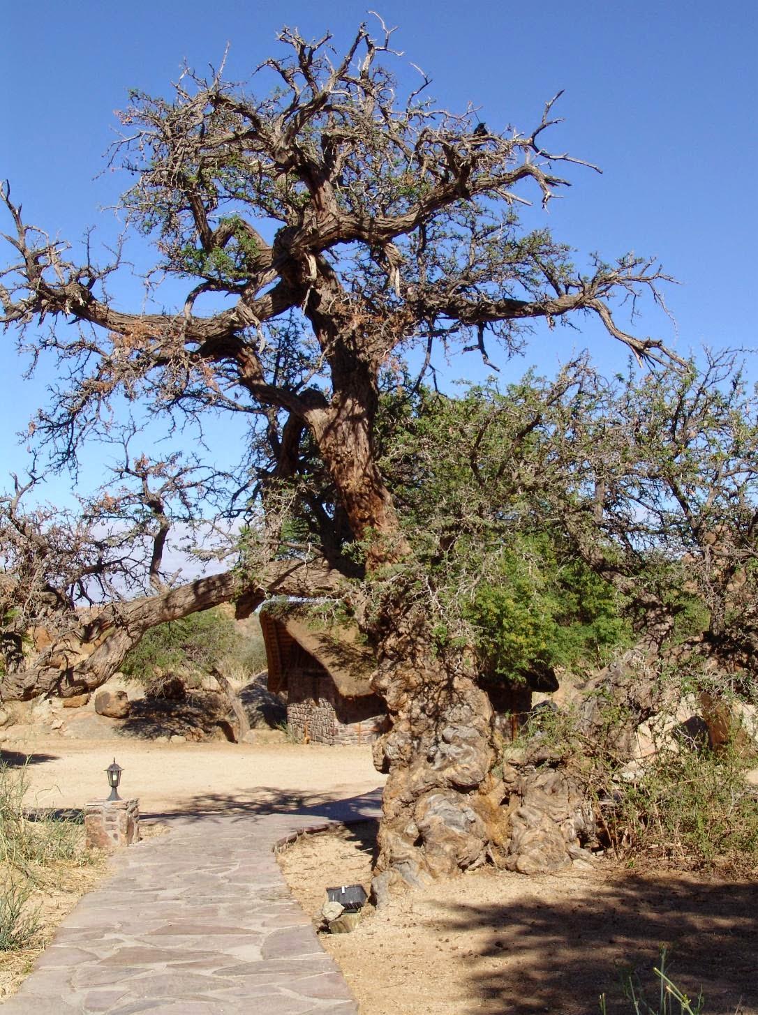 Canyon Lodge Nambia - www.namibweb.com/canyonl.htm