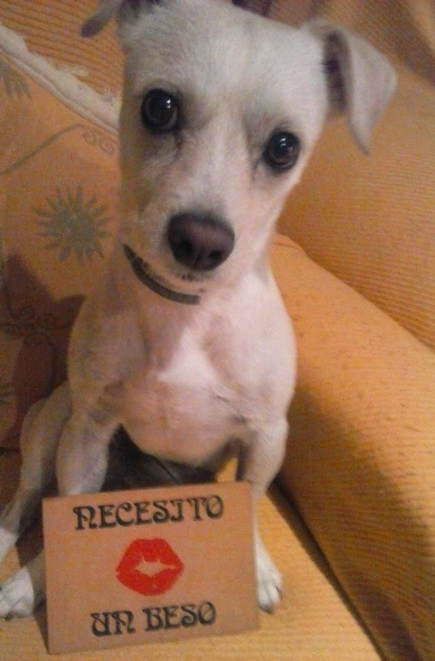 """PROYECTO """"Necesito un beso"""":Dogui"""
