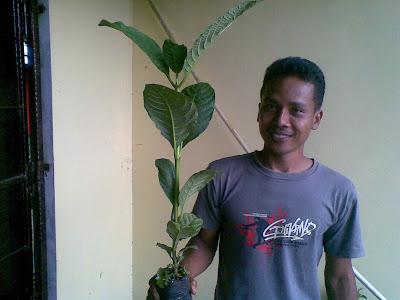 16042011 HARGA BIBIT SUPER