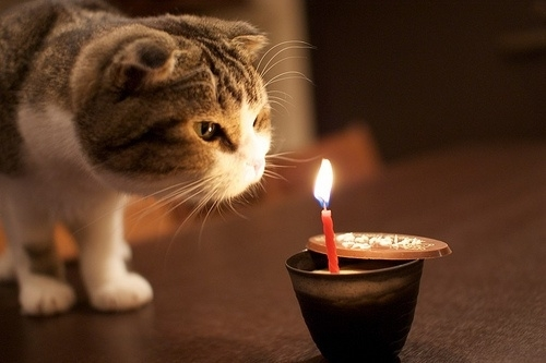 praying cat, birthday cat