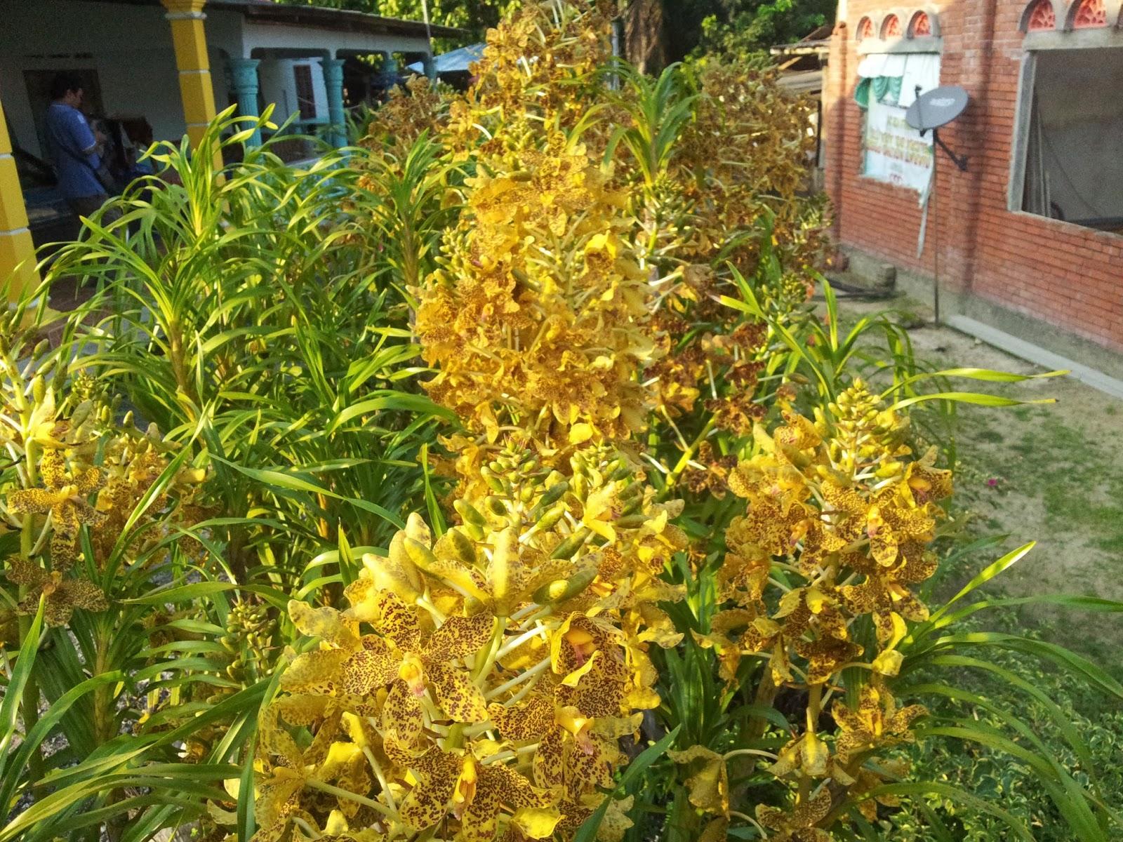 gambar bunga orkid harimau internet marketing dan bisnis online