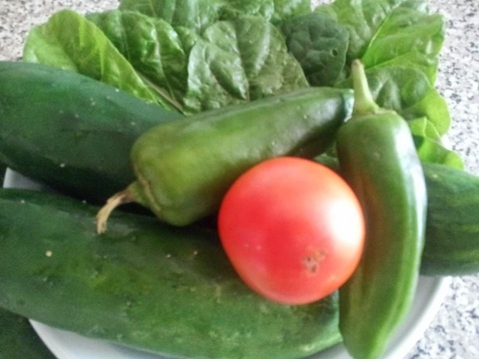 Home grown vegetables, organic vegetables, cucumbers, tomatoes, peppers, swiss chard, gardening