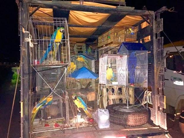 Animais silvestres foram resgatados e entregues durante operação integrada (Foto: Divulgação/PRF)