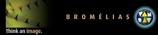 bromélias van ray