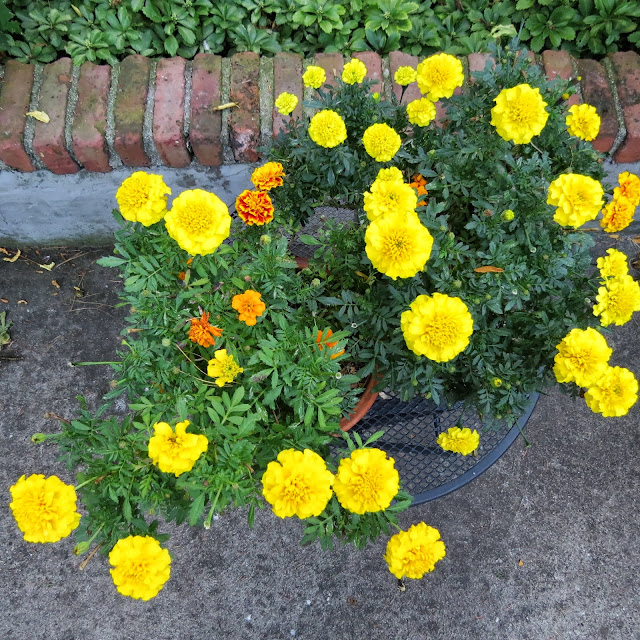 The-Last-of-the-Marigolds