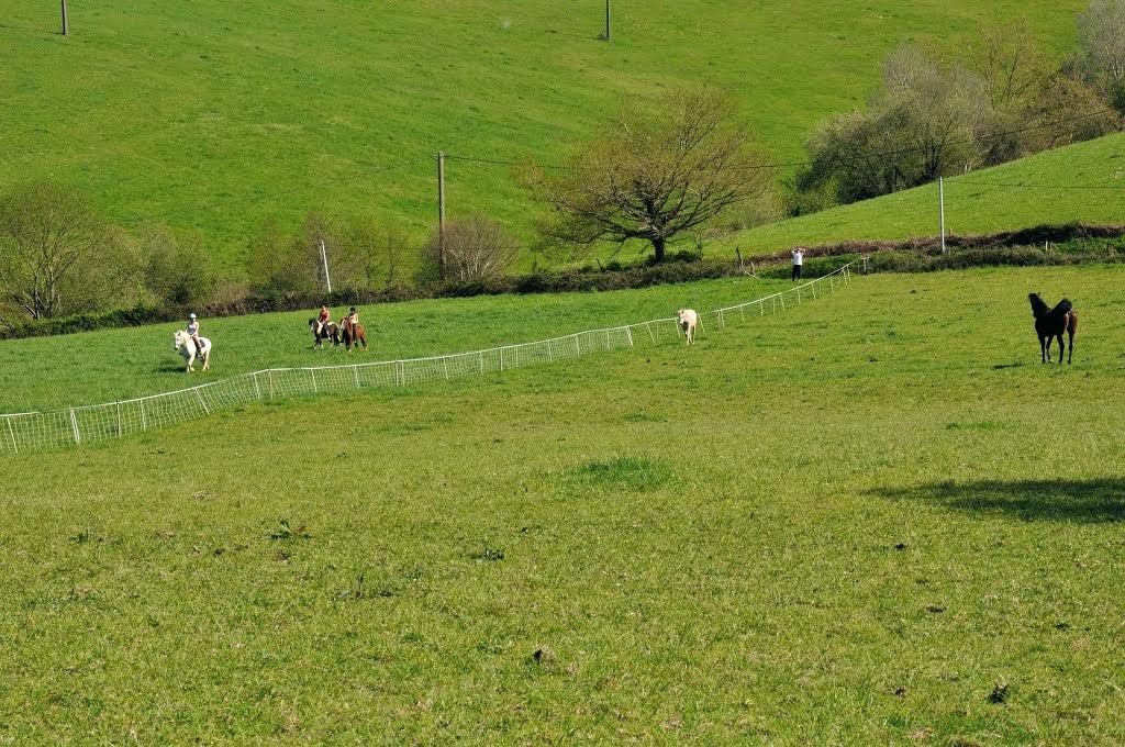 Pâture des chevaux