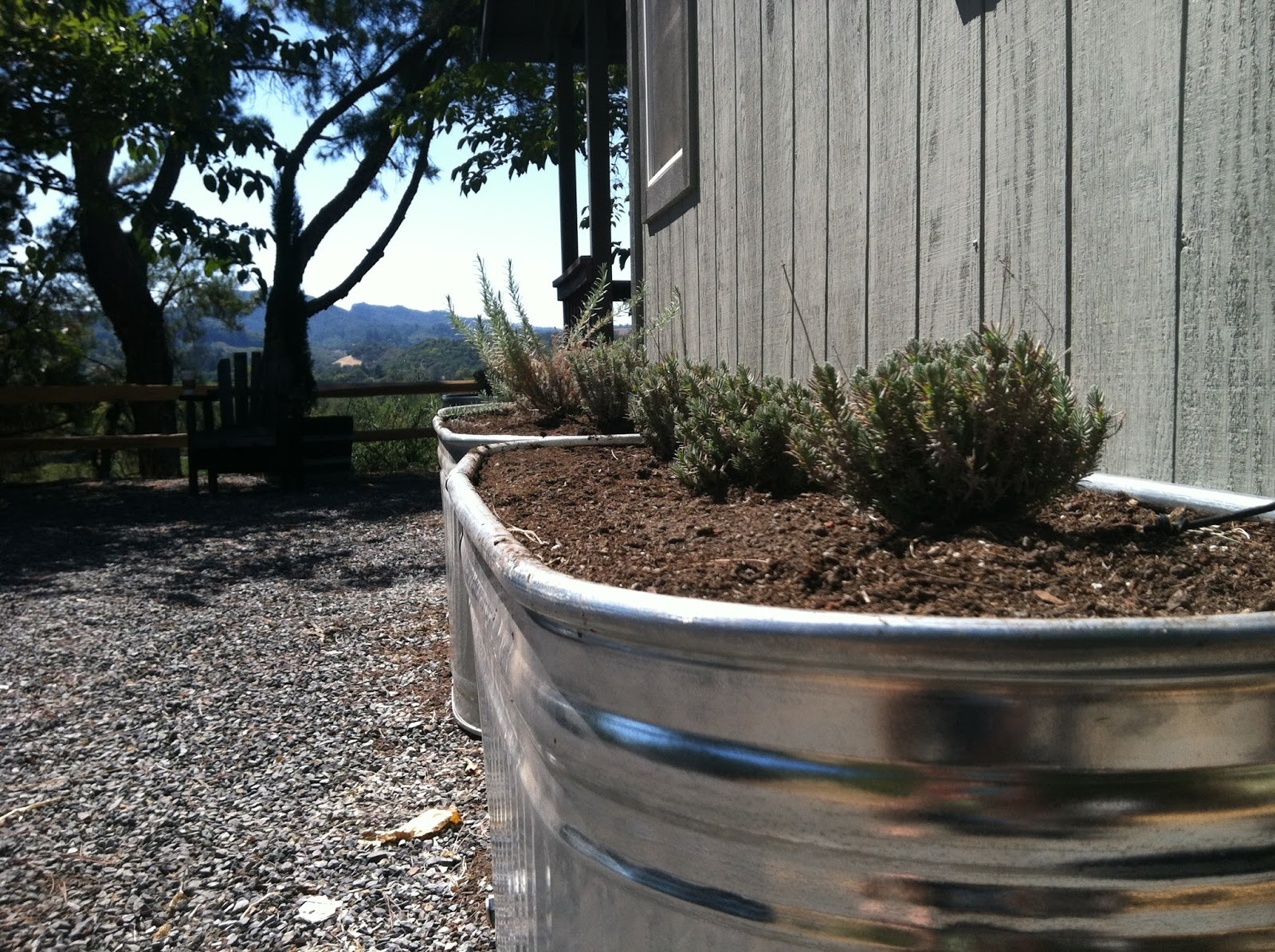 vignette design My Galvanized Water Trough Raised Bed Garden
