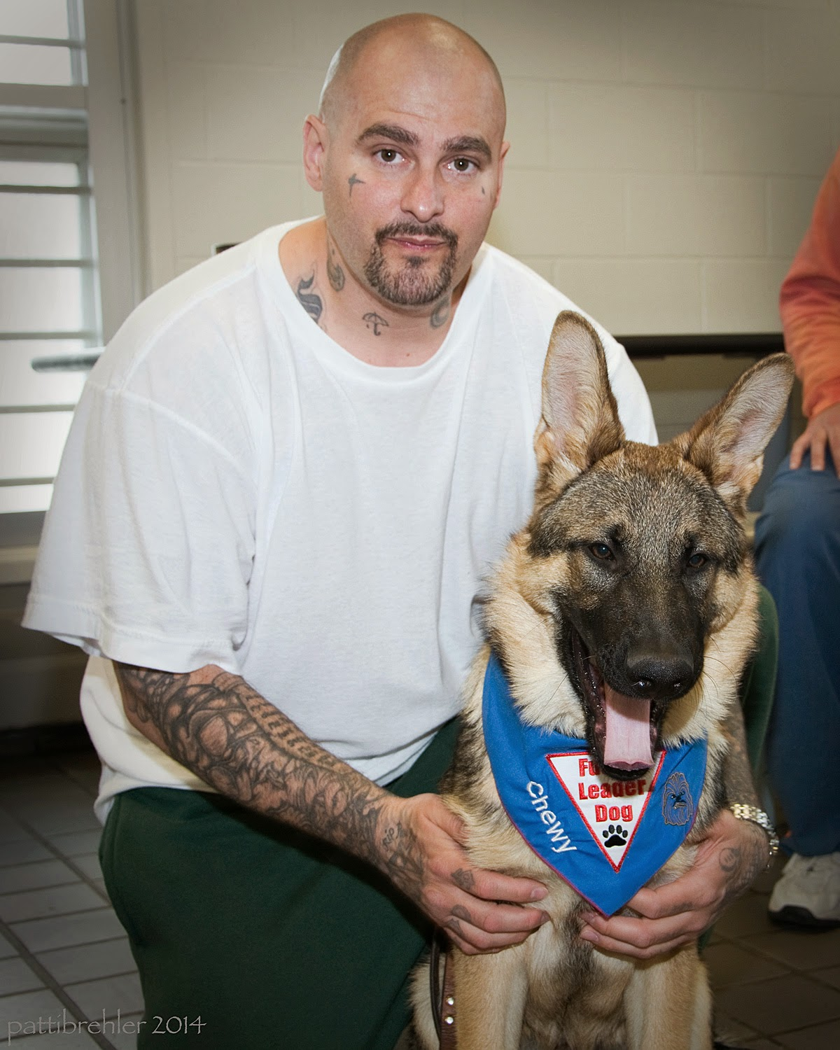 "A bald man with a goatee wearing green pants and a white t-shirt is half-kneeling with a german shepherd dog sitting at his left side. The man has his hands around the dog's chest. His forearms are covered with tatooes. The dog is wearing the blue Future Leader Dog bandana with his name ""Chewy"" embroidered on the side."