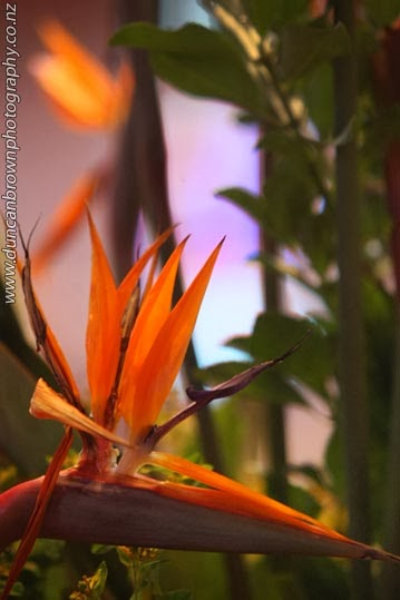 Just heavenly - Bird of Paradise in the Waiapu Anglican Cathedral of St John the Evangelist, Napier photograph