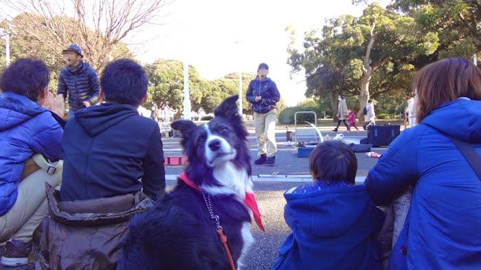 http://border-polly.blogspot.jp/2014/12/2014_15.html