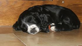 Tasmin asleep round a doorstop
