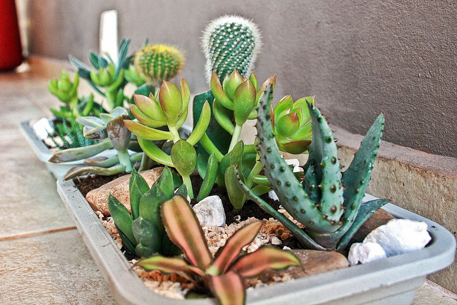 Como fazer um mini jardim decorativo  Receitas Lá na Roça