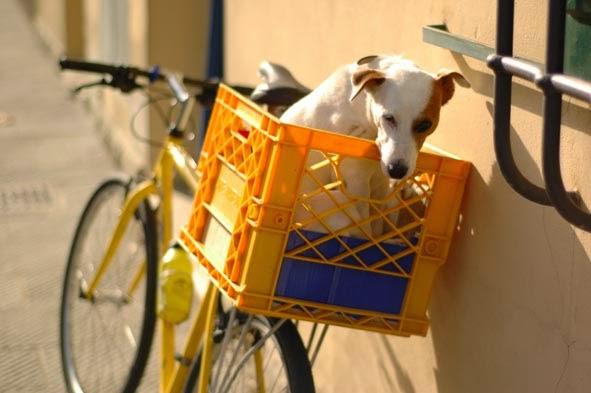 Bolsa Para Levar Cachorro Na Bicicleta : Bikelovers dicas de como pedalar com seu animal