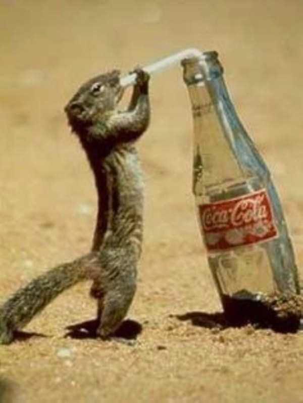 Esquilo inteligente
