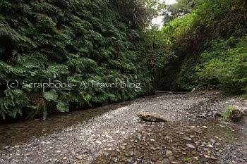 Fern Canyon at Prairie Creek Redwoods State Park