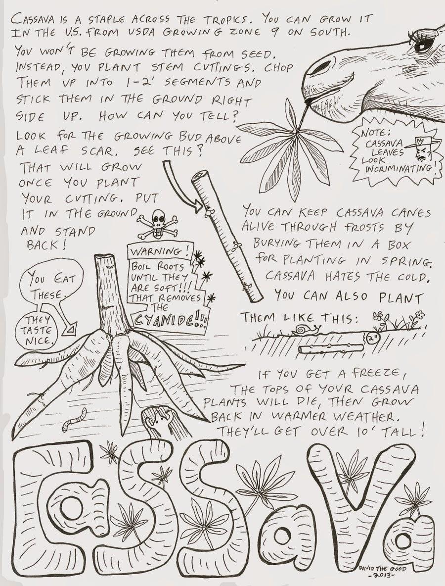 how to plant cassava