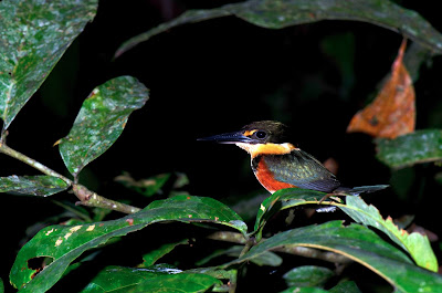 Tambopata Research Center Phil Torres Peru Rainforest Expeditions