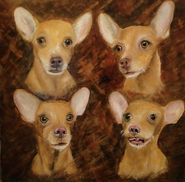 head studies of a chihuahua