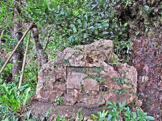 stone marker, sacred tree
