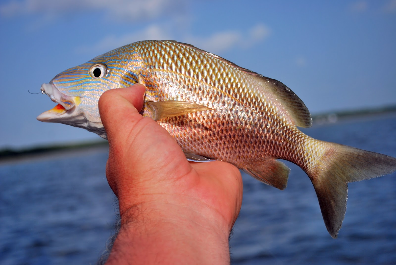 Litton's Fishing Lines: Grunts: Fighting Panfish of ...
