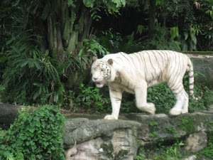 The Singapoe Zoo