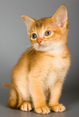 Cute Pussy Cat 21
