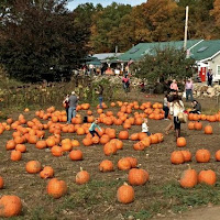 New England Fall Events_Smolak Farms Andover MA pumpkin patch