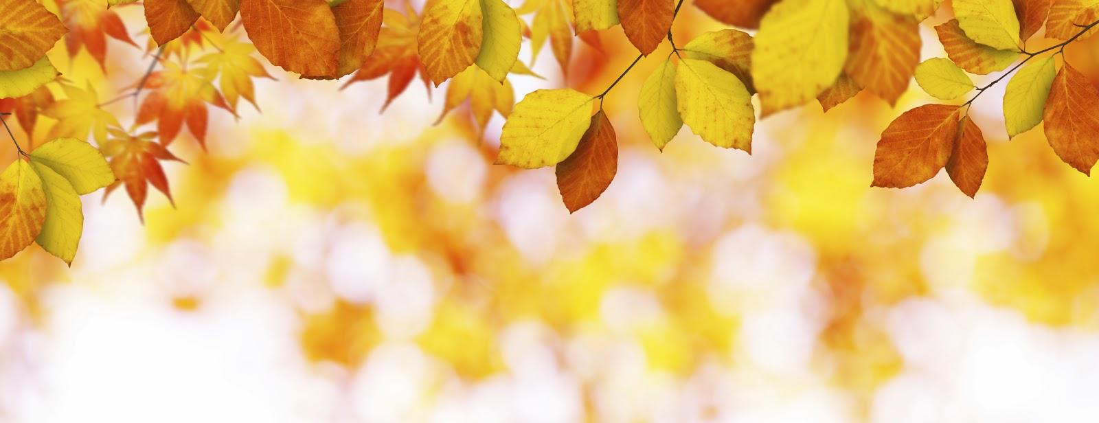 Image result for leaves banner