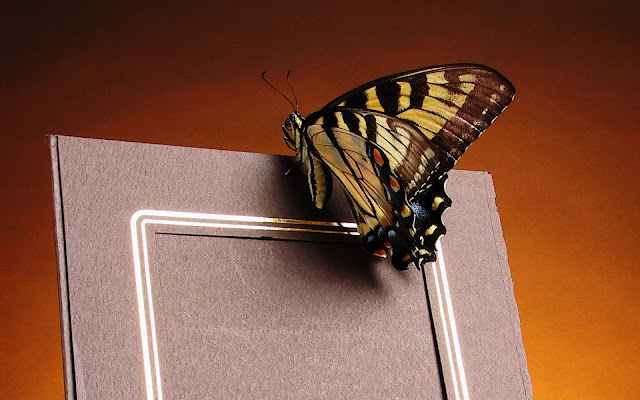 Best Jungle Life photo frame, butterfly photo