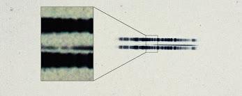 La evidencia más antigua del mundo fuera del sistema solar