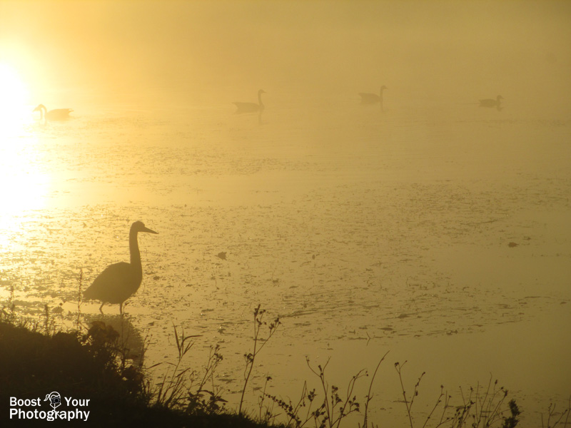 A heron's sunrise silhouette | Boost Your Photography