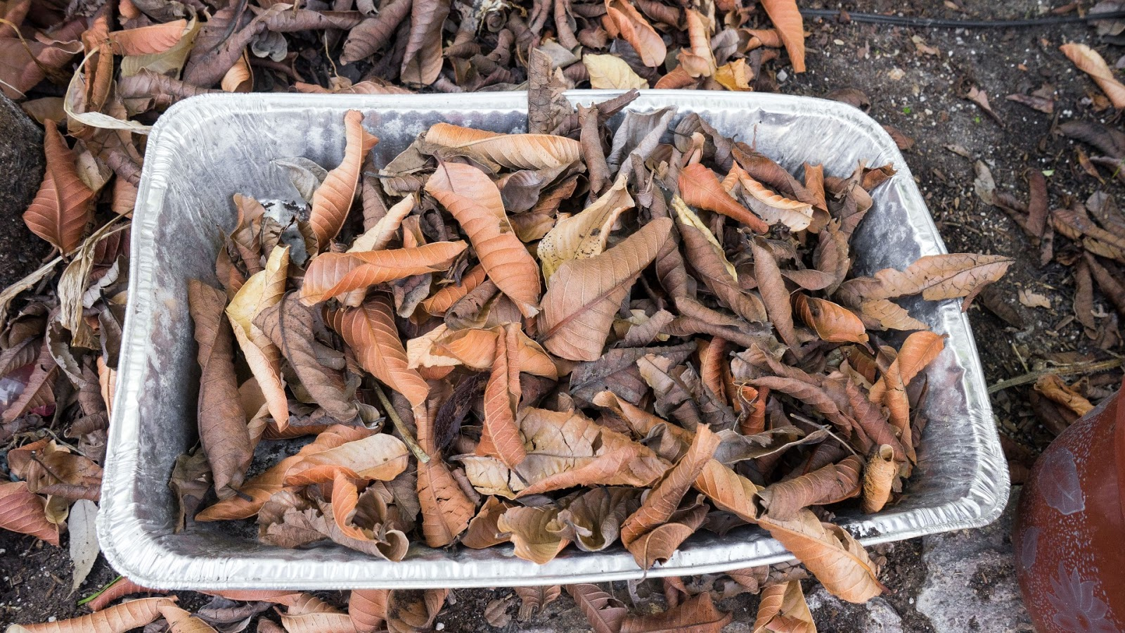 compost leaf mulch