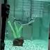 כריש פארון טורף שתי תולעים חיות ענקיות