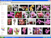 How to Extract or Leech Pictures from Google Images (search)