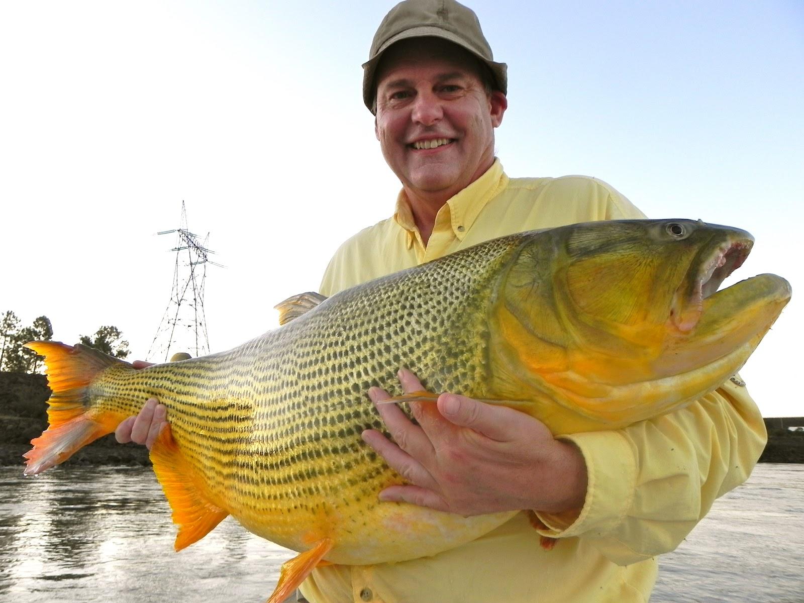 The fishing news la zona for monster golden dorado for Golden dorado fish