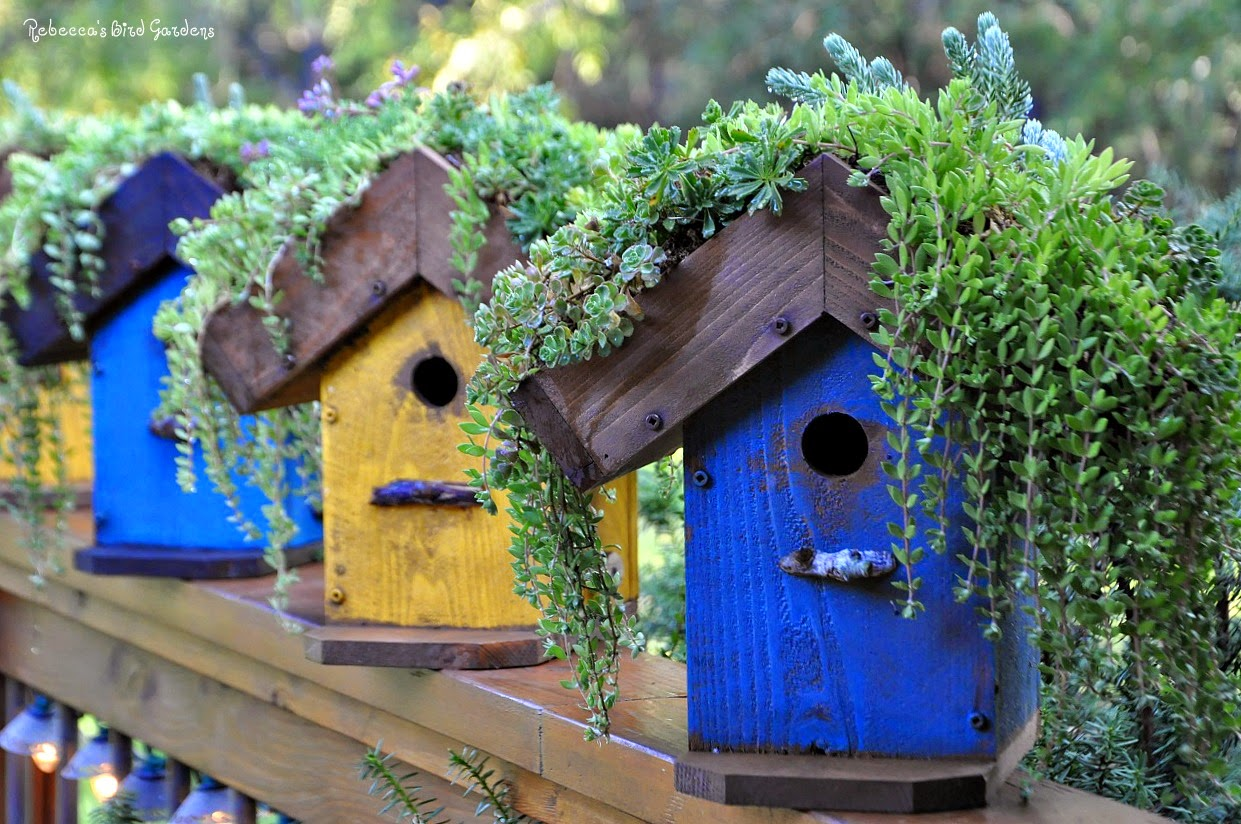 rebecca 39 s bird gardens blog diy living roof birdhouse. Black Bedroom Furniture Sets. Home Design Ideas