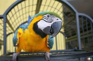 veterinaria online intoxicacion por toxicos inhalados aves