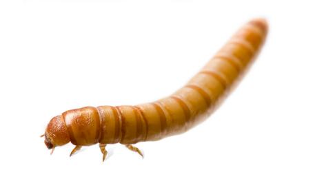 Home Farm Ideas: Building a Mealworm Farm